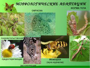 покровительственная ОКРАСКА ФОРМА ТЕЛА предостерегающая Мимикрия (муха журчал