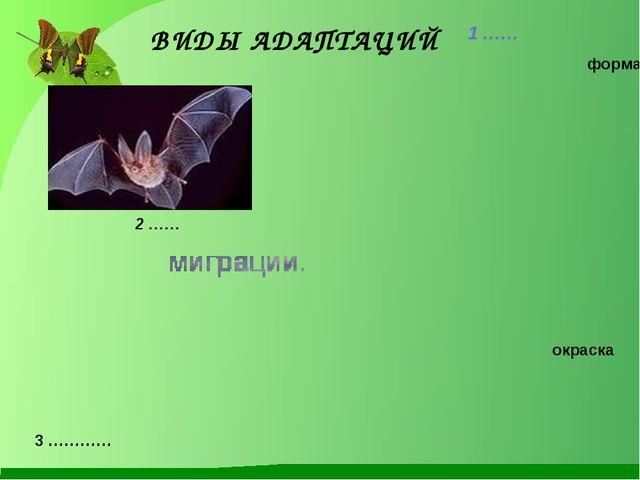 ВИДЫ АДАПТАЦИЙ 1 …… 2 …… форма окраска 3 …………