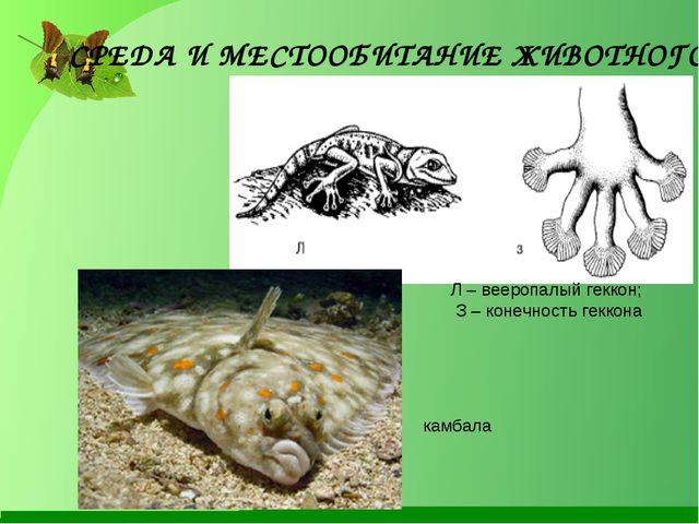 Л – вееропалый геккон; З – конечность геккона СРЕДА И МЕСТООБИТАНИЕ ЖИВОТНОГО...