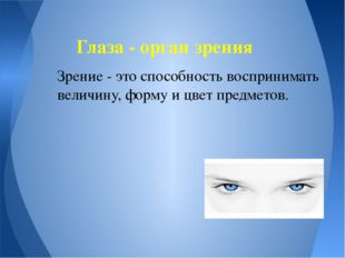 Зрение - это способность воспринимать величину, форму и цвет предметов. Глаза