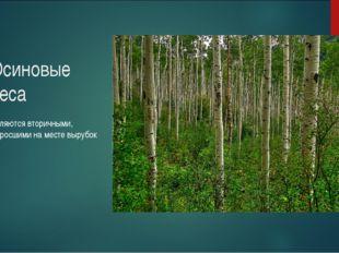 Осиновые леса Являются вторичными, выросшими на месте вырубок