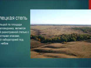 Стрелецкая степь самый большой по площади участок заповедника, является красо
