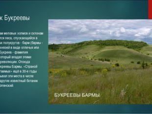Участок Букреевы Бармы По верхушкам меловых холмов и склонам располагаются ле