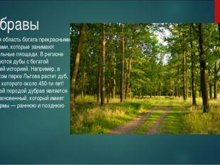 Дубравы Курская область богата прекрасными дубравами, которые занимают значит