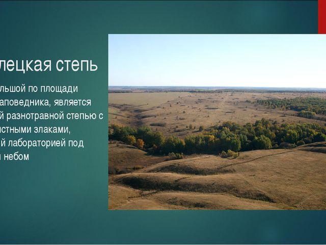 Стрелецкая степь самый большой по площади участок заповедника, является красо...