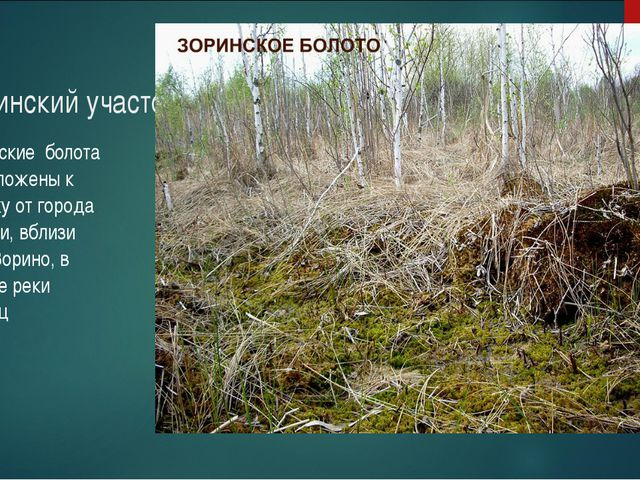 Зоринский участок Зоринские болота расположены к востоку от города Обояни, вб...