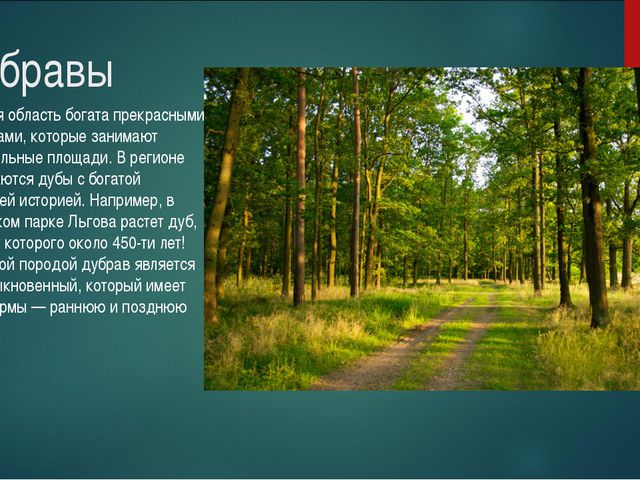 Дубравы Курская область богата прекрасными дубравами, которые занимают значит...