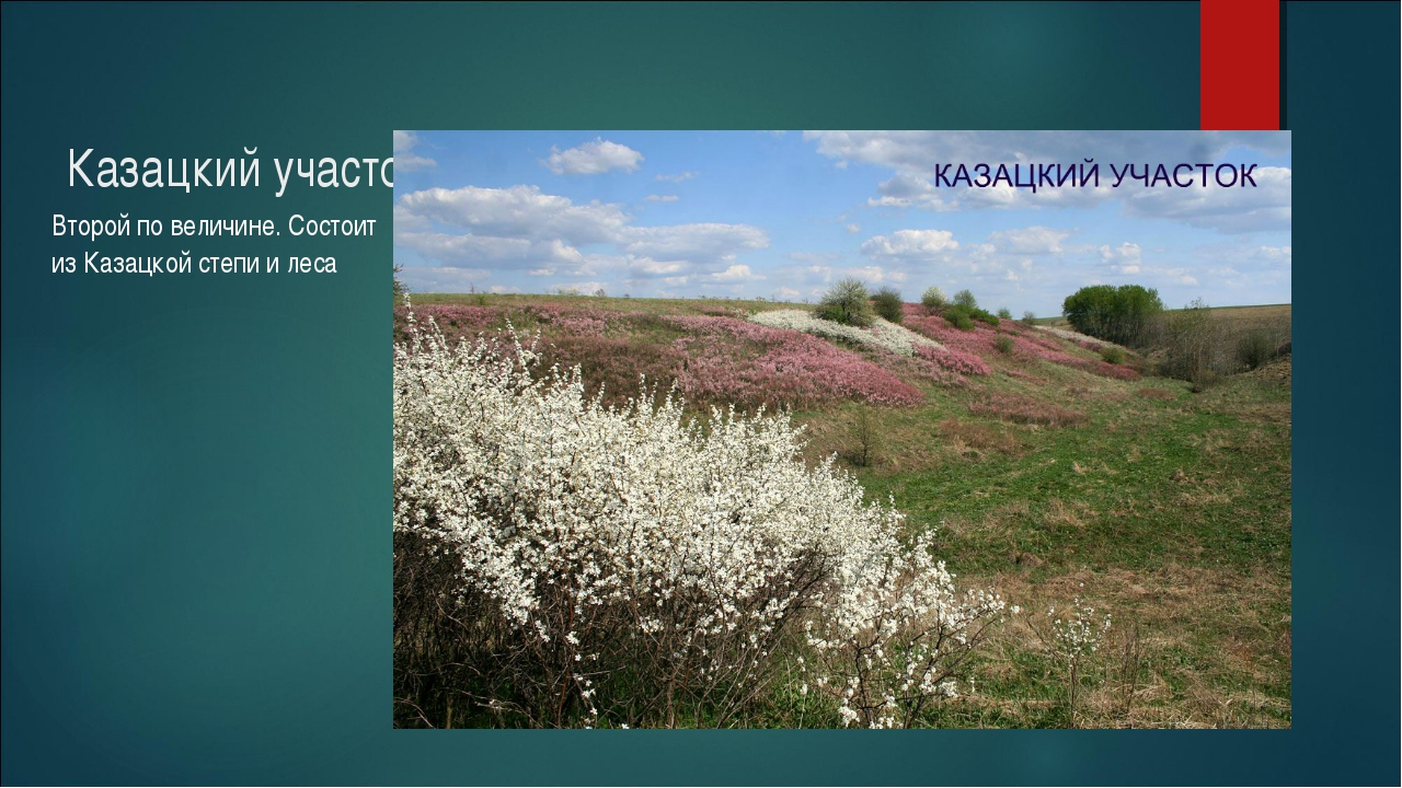 Казацкий участок Второй по величине. Состоит из Казацкой степи и леса