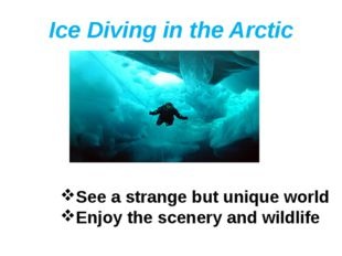 Ice Diving in the Arctic See a strange but unique world Enjoy the scenery and