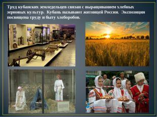 Труд кубанских земледельцев связан с выращиванием хлебных зерновых культур. К