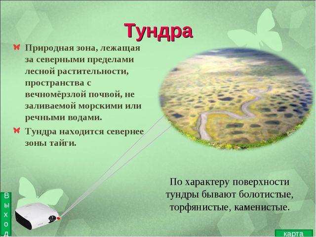 Тундра Природная зона, лежащая за северными пределами лесной растительности,...