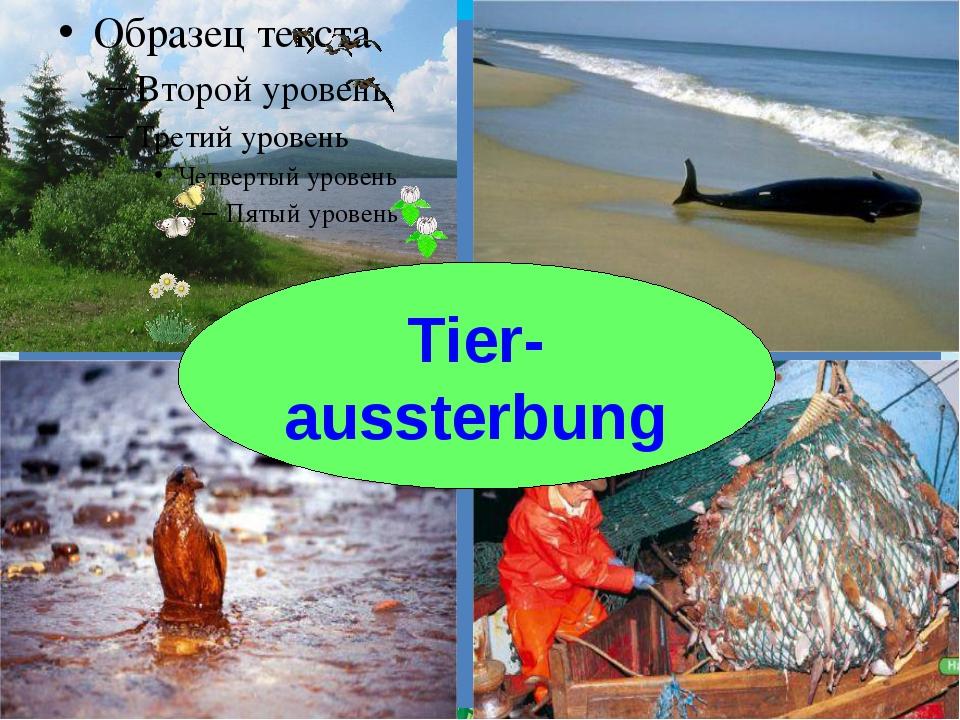 Tier- aussterbung FokinaLida.75@mail.ru