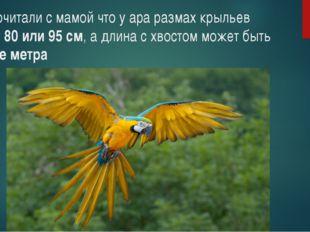 Мы прочитали с мамой что у ара размах крыльев бывает 80 или 95 см, а длина с