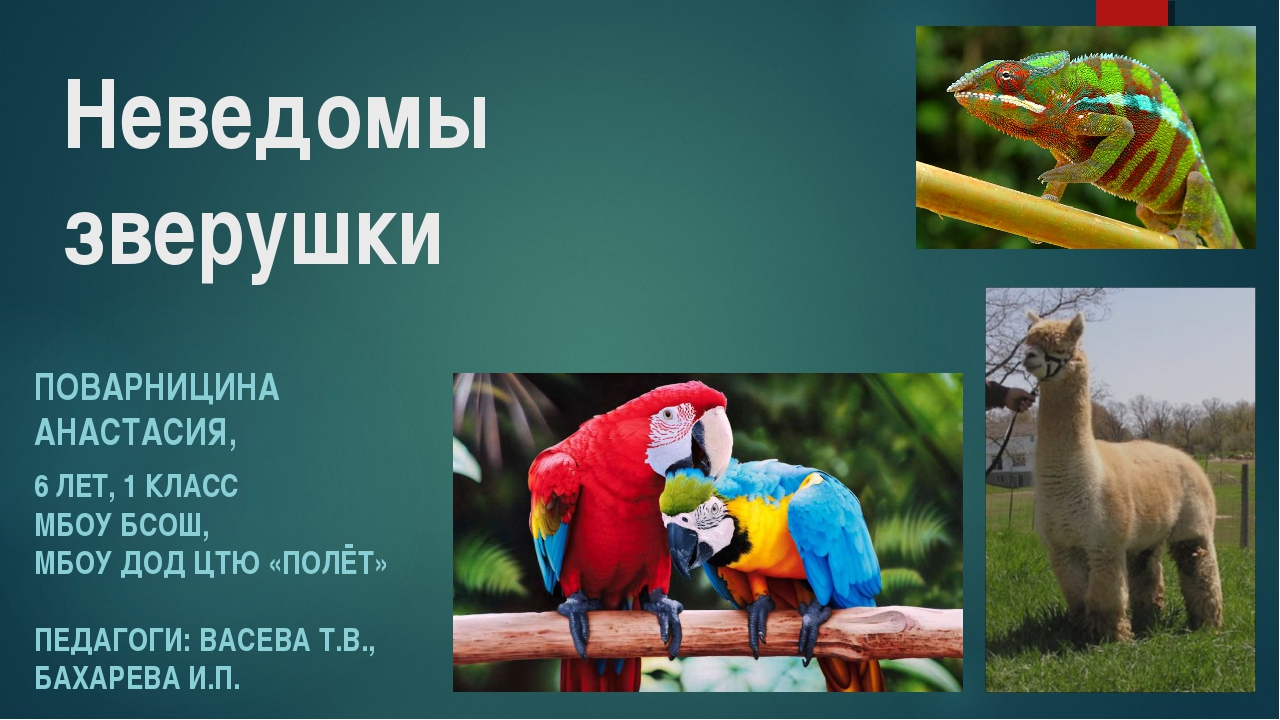 Неведомы зверушки ПОВАРНИЦИНА АНАСТАСИЯ, 6 ЛЕТ, 1 КЛАСС МБОУ БСОШ, МБОУ ДОД Ц...