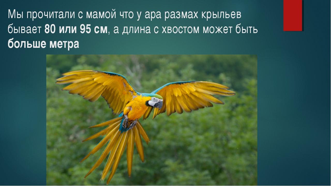 Мы прочитали с мамой что у ара размах крыльев бывает 80 или 95 см, а длина с...