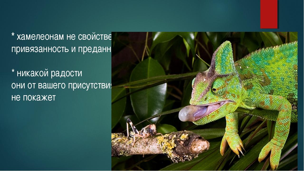 * хамелеонам не свойственна привязанность и преданность * никакой радости он...