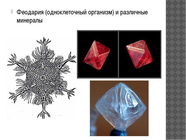 Феодария (одноклеточный организм) и различные минералы