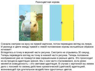Разноцветная корова Сначала смотрим на муху на правой картинке, потом перевод