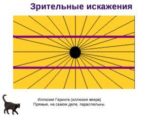 Иллюзия Геринга (иллюзия веера) Прямые, на самом деле, параллельны. Зрительны