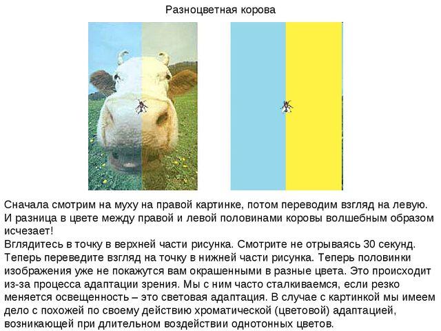 Разноцветная корова Сначала смотрим на муху на правой картинке, потом перевод...