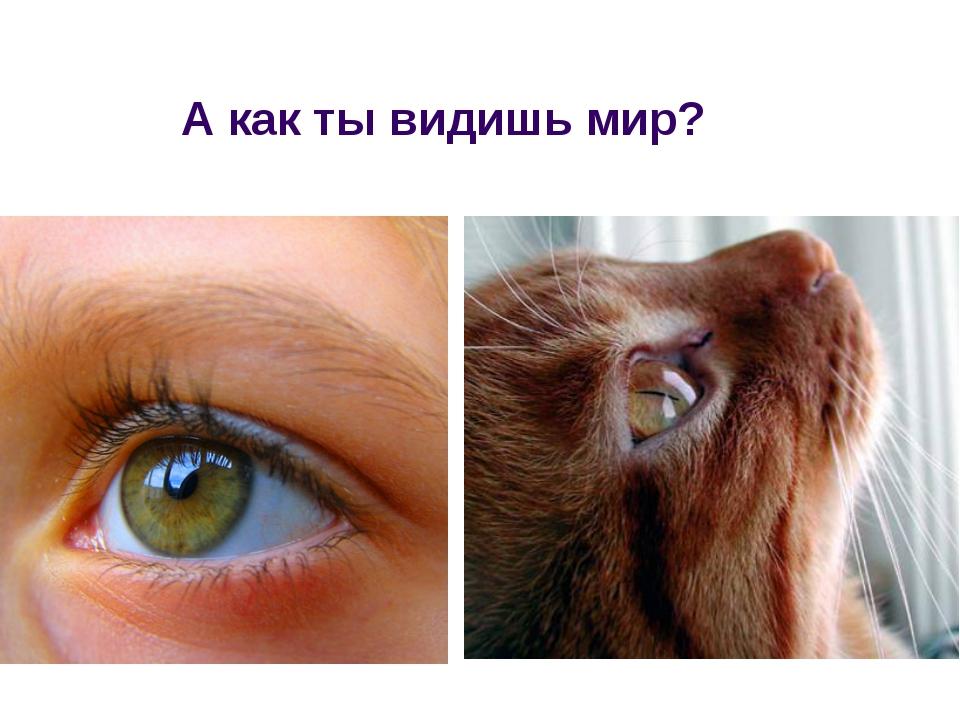 А как ты видишь мир?