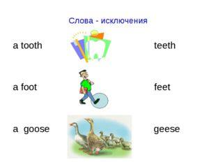 Слова - исключения a tooth teeth a foot feet a goose geese