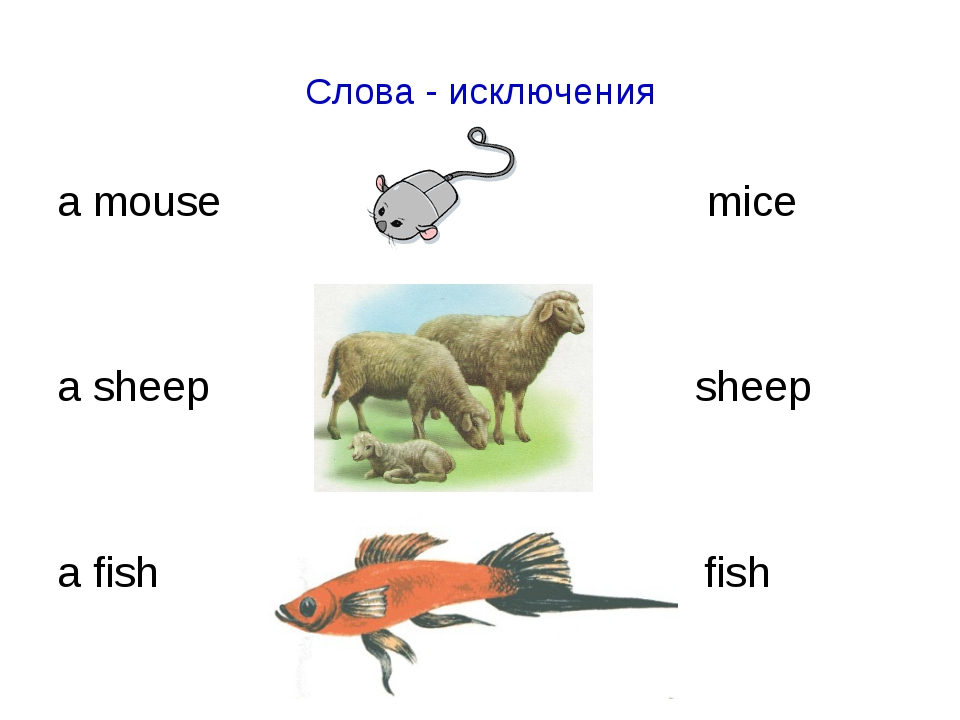 Слова - исключения a mouse mice a sheep sheep a fish fish