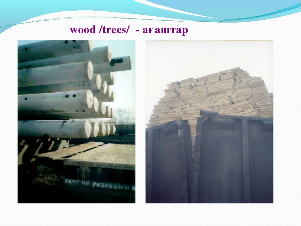 wood /trees/ - ағаштар