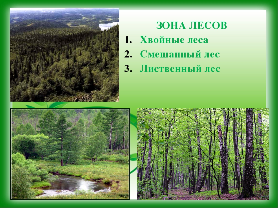 ЗОНА ЛЕСОВ Хвойные леса Смешанный лес Лиственный лес
