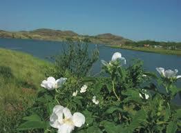 Картинки по запросу фото реки Кальмиуса