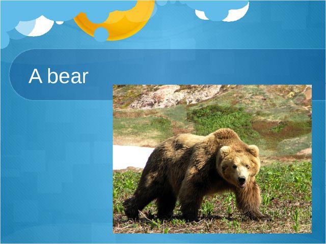 A bear