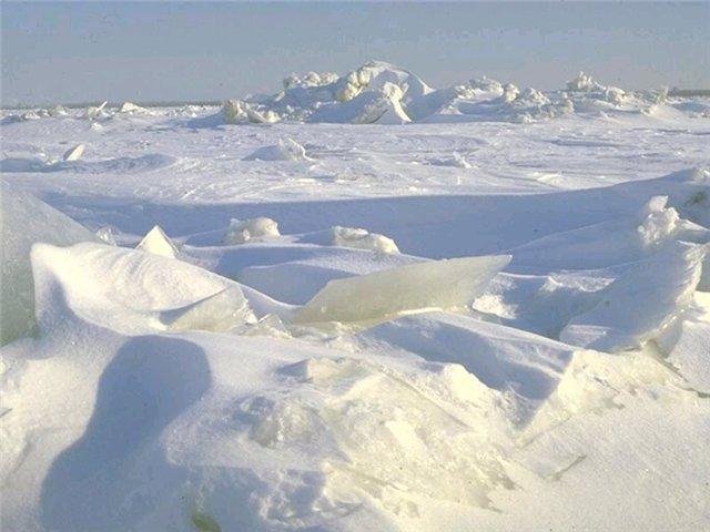 Южнее зоны арктических пустынь , вдоль берегов северных море…