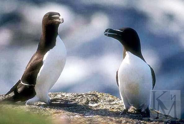 Мои фотографии - Фотоальбомы - Разнообразие птиц