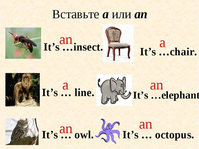It's … octopus. It's … owl. an an Вставьте a или an It's …insect. It's …eleph...