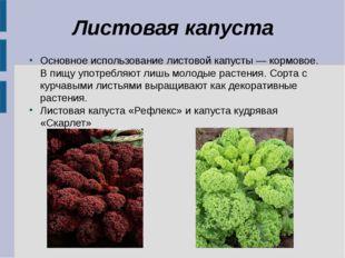 Листовая капуста Основное использование листовой капусты — кормовое. В пищу у
