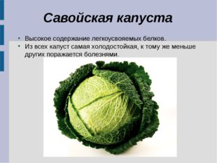Савойская капуста Высокое содержание легкоусвояемых белков. Из всех капуст са