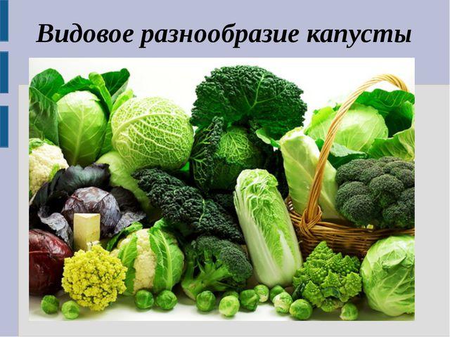 Видовое разнообразие капусты