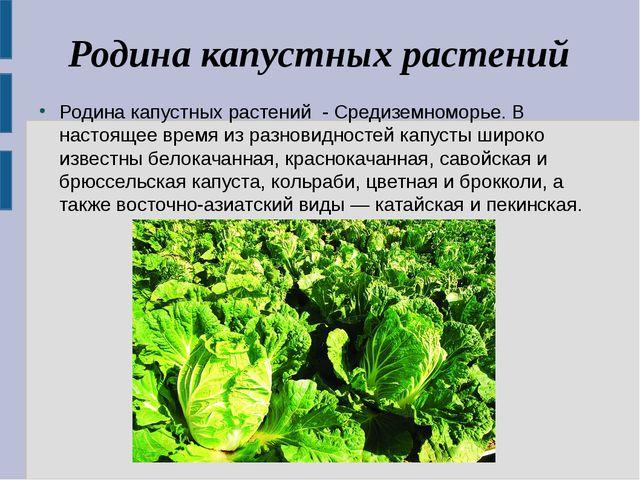Родина капустных растений Родина капустных растений - Средиземноморье. В наст...