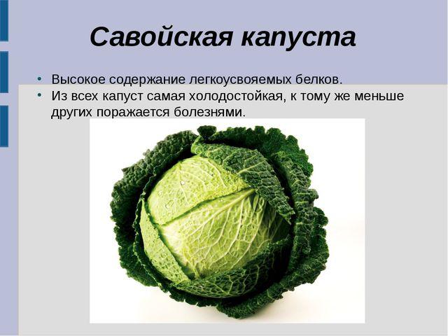 Савойская капуста Высокое содержание легкоусвояемых белков. Из всех капуст са...