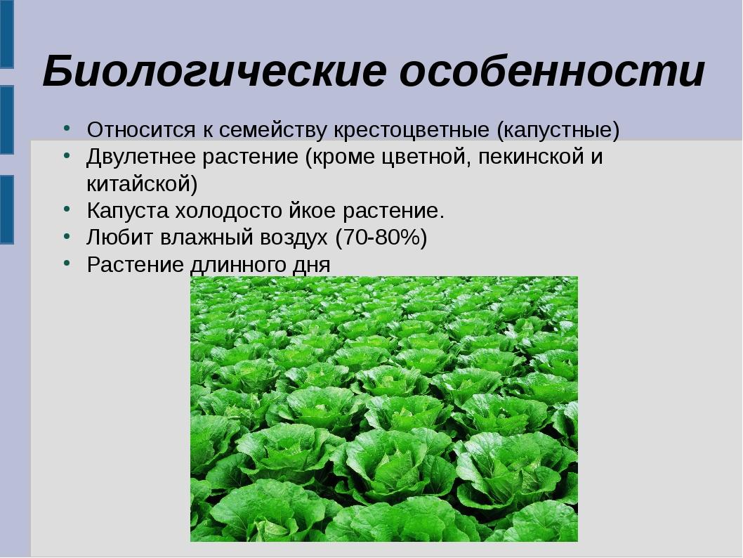 Биологические особенности Относится к семейству крестоцветные (капустные) Дву...