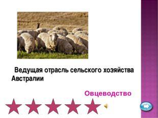 Ведущая отрасль сельского хозяйства Австралии Овцеводство