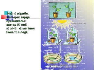 №2 тәжірибе, жапырақтарда органикалық заттар Күннің көзінің көмегімен ғана т