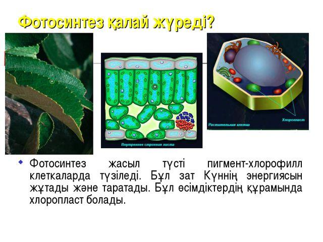 Фотосинтез қалай жүреді? Фотосинтез жасыл түсті пигмент-хлорофилл клеткаларда...