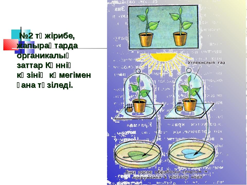 №2 тәжірибе, жапырақтарда органикалық заттар Күннің көзінің көмегімен ғана т...