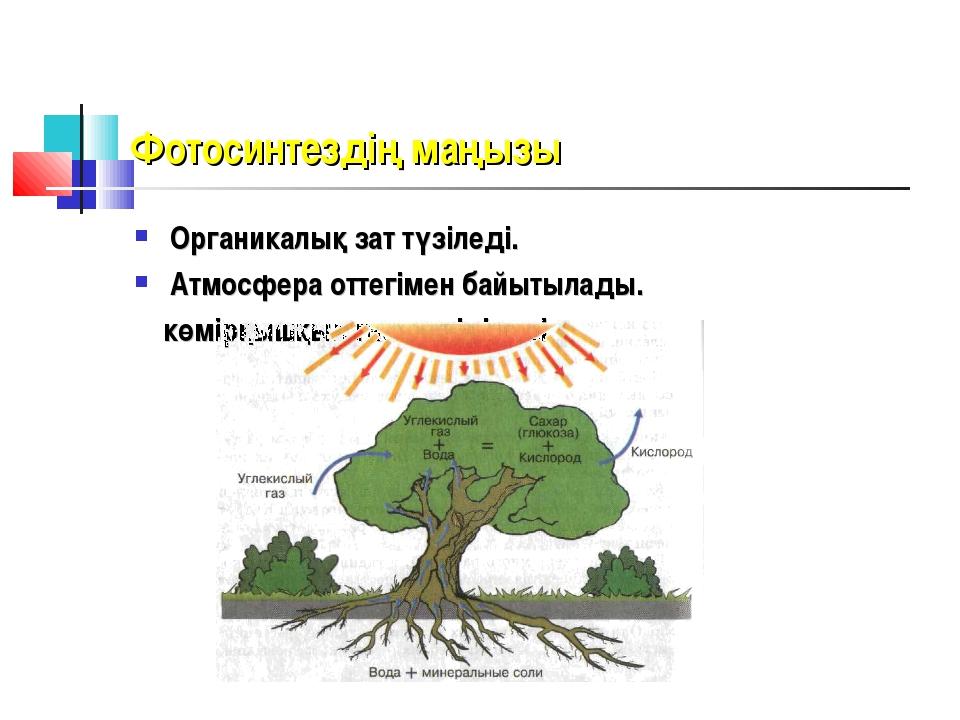 Фотосинтездің маңызы Органикалық зат түзіледі. Атмосфера оттегімен байытылады...