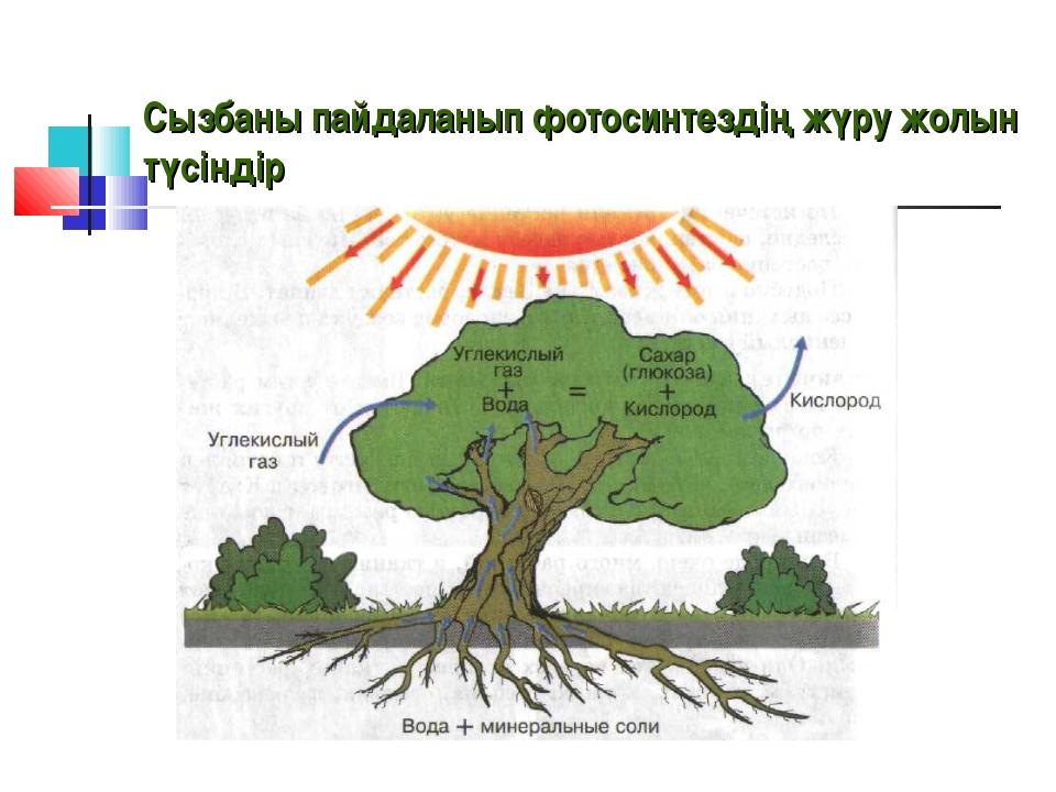 Сызбаны пайдаланып фотосинтездің жүру жолын түсіндір