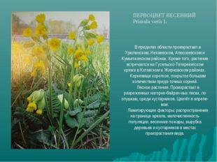 В пределах области произрастает в Урюпинском, Нехаевском, Алексеевском и Кумы