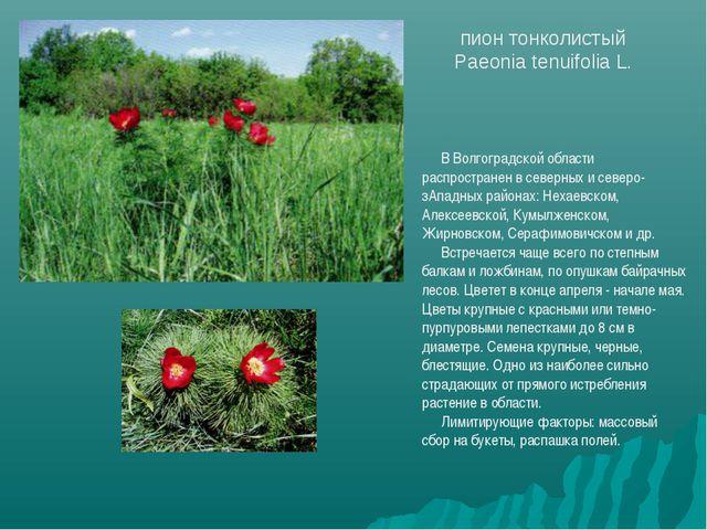 В Волгоградской области распространен в северных и северо-зАпадных районах: Н...