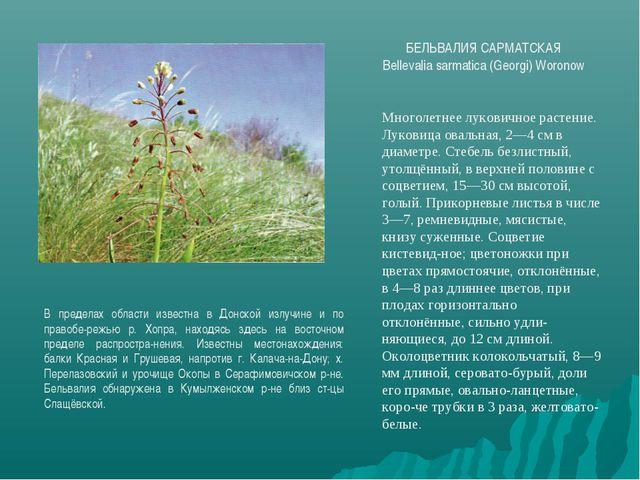БЕЛЬВАЛИЯ САРМАТСКАЯ Bellevalia sarmatica (Georgi) Woronow В пределах области...