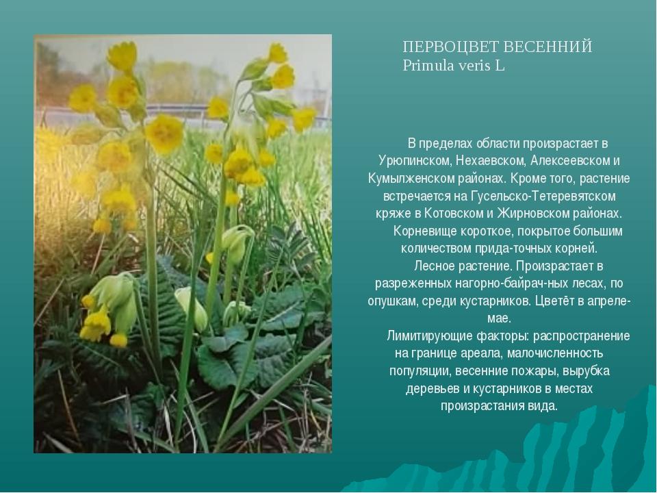В пределах области произрастает в Урюпинском, Нехаевском, Алексеевском и Кумы...